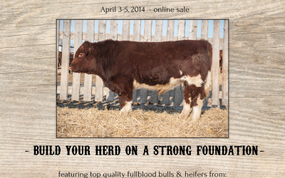 2nd Annual Foundations Fullblood Maine Anjou Sale